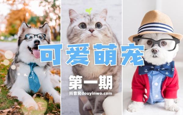萌宠动物抖音快手短视频素材 第22张